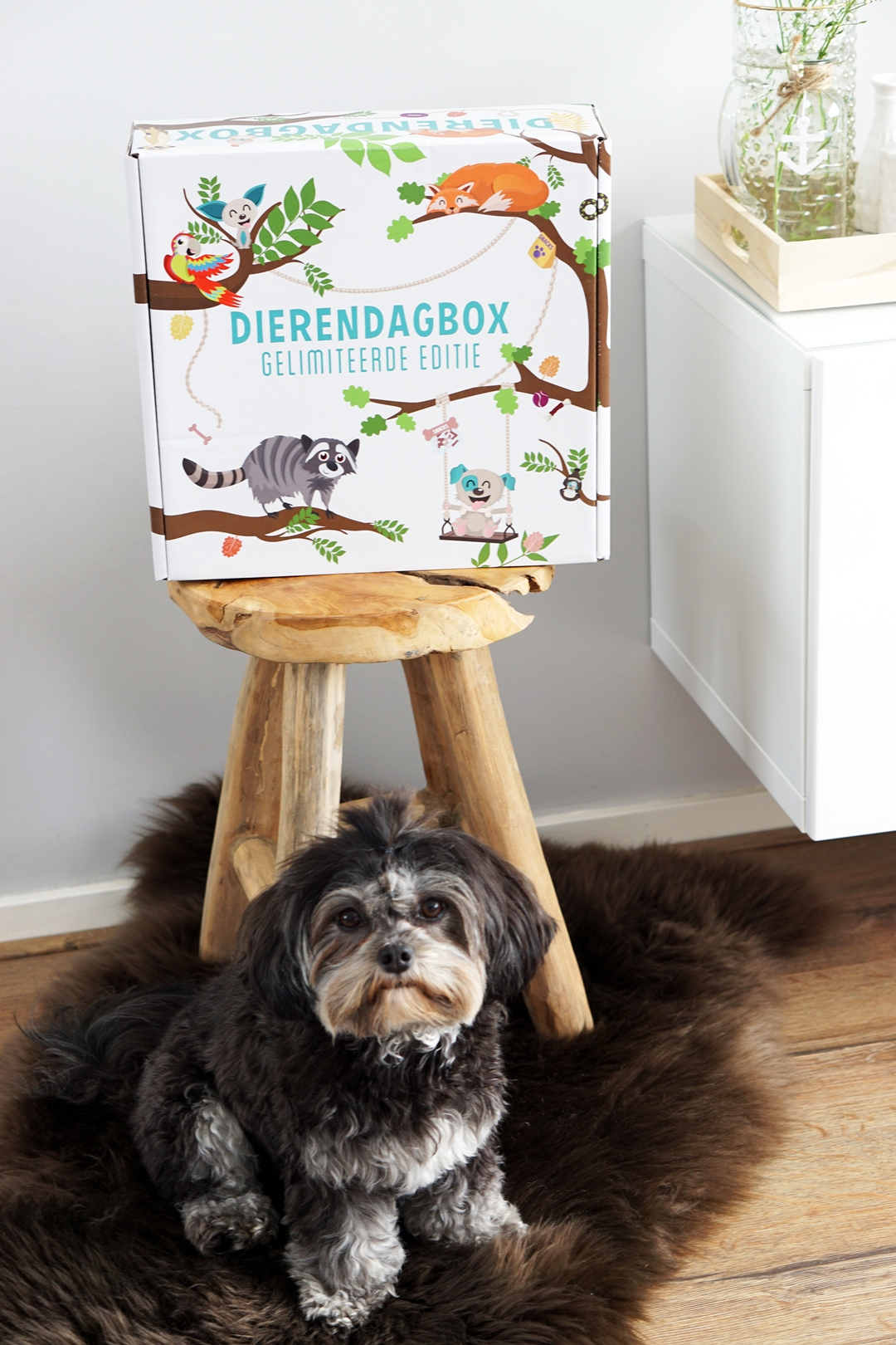 "Unboxing Snuffelbox ""Limited Edition""Dierendagbox"
