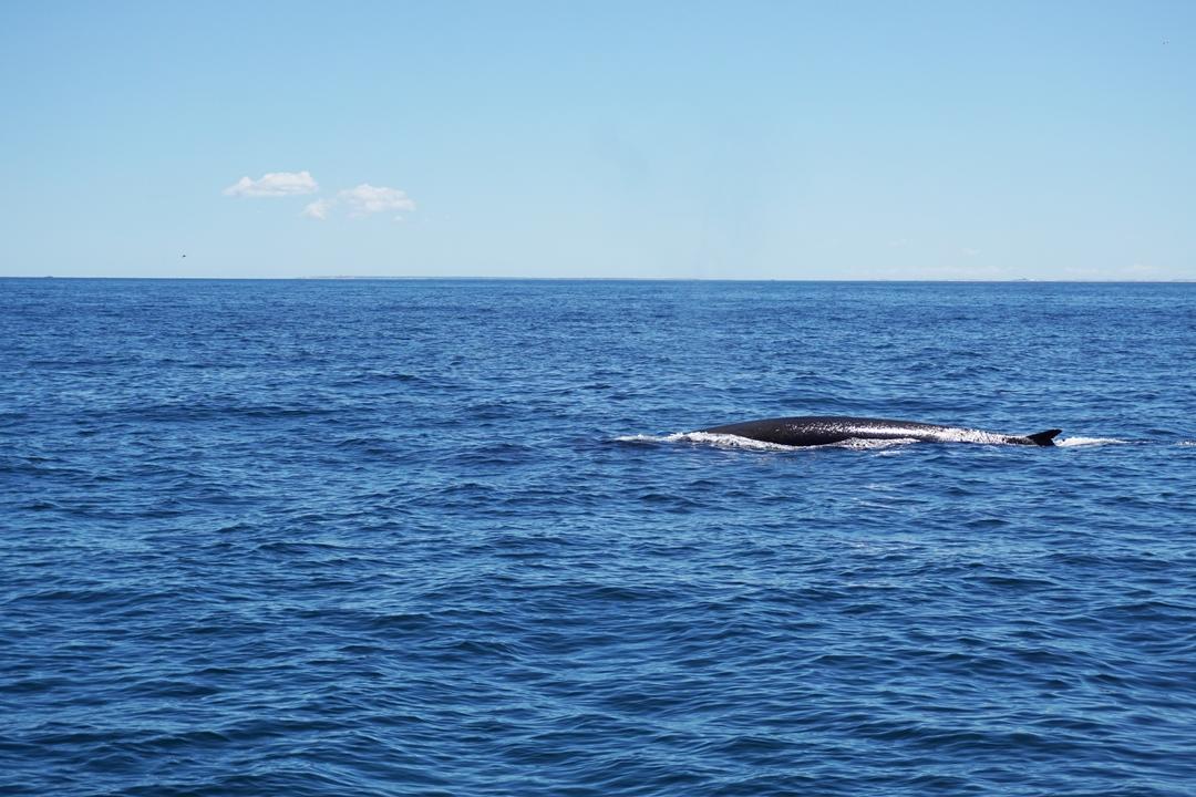Netflix Our Planet, omdat dit ons allemaal aangaat, walvis